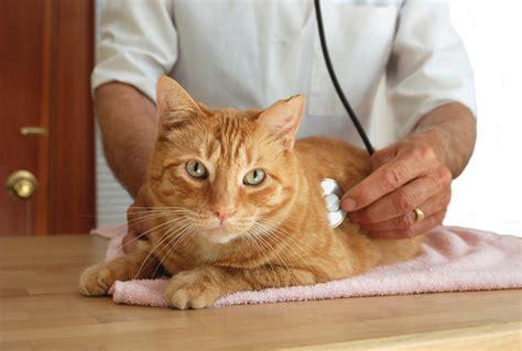 Schwertfarn Giftig Für Katzen by Ist Die Taglilie Giftig 187 Risiken Und Ma 223 Nahmen