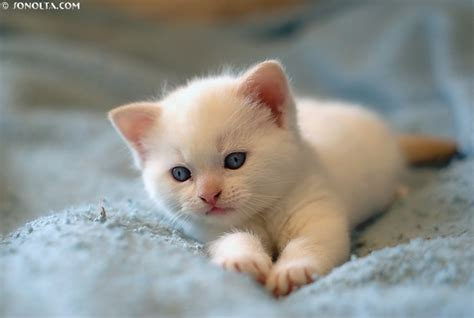 It's Hd  Animalsfunnywallpapers Cute Baby White Kittens