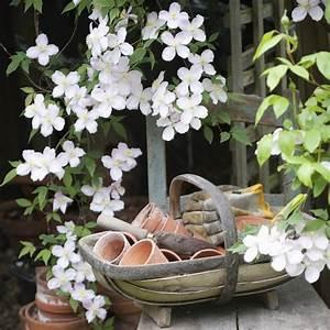 Grand Pot Plante : quelle plante mettre dans un grand pot exterieur ~ Premium-room.com Idées de Décoration