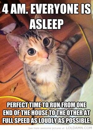 Super Funny Cat Quotes Quotesgram