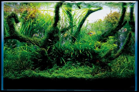 Japanese Aquascape by Aquascape Nature Aquarium Style T A G