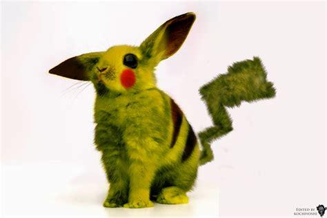 Pikachu Real Life By Kochiyoshi On Deviantart