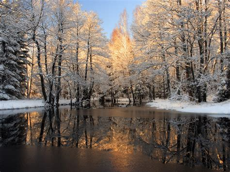 winter trees covered  snow frozen lake background