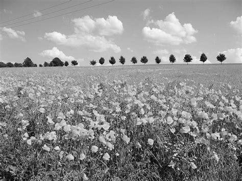 shades  gray tips  shooting black  white film
