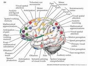 memory consolidation | Neural Science | Pinterest