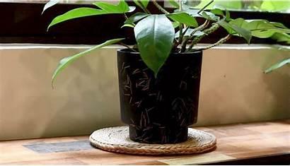 Plants Hdb Easy Plant Decorate Ways Indoor