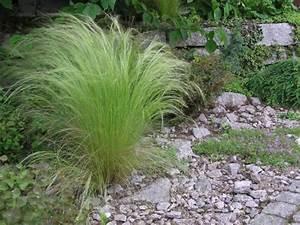 Gräser Im Garten Gestaltungsideen : kiesgarten steine gr ser bunte blumen mein sch ner garten ~ Eleganceandgraceweddings.com Haus und Dekorationen
