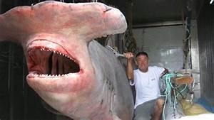 World's Biggest Shark Ever Captured: 40-Feet Long
