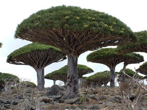 top 10 amazing trees toptenz net