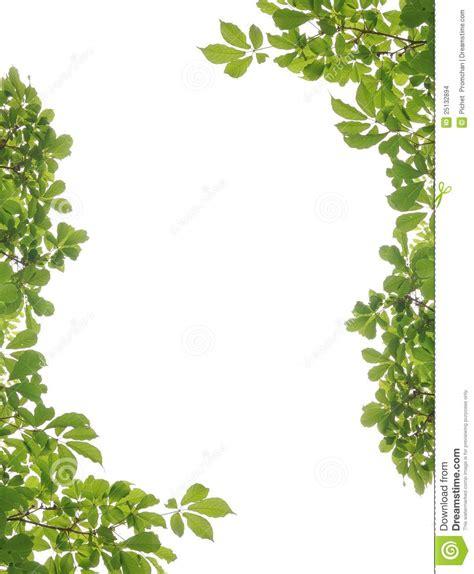 framing leaves frame and leaf stock images image 25132894