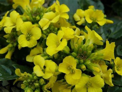 zijn bloemen van munt eetbaar 1000 images about eetbare wilde planten en bloemen op