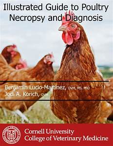 Illustrated Guide To Poultry Necropsy And Diagnosis