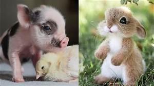 Cute baby anima... Cute Animals