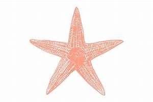 Vector Starfish Illustration ~ Illustrations ~ Creative Market