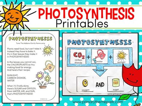 photosynthesis for kids and teaching pinterest