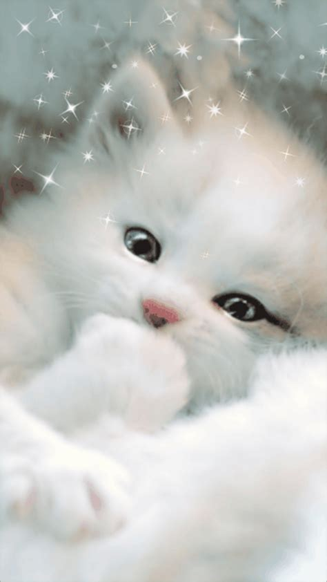 moving cat wallpapers gallery