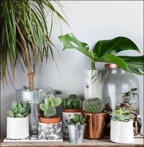 plantes pour chambre 1000 idées sur le thème terrarium pour plantes grasses sur