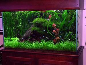 transform the way your home looks using a fish tank With fish tank designs for home