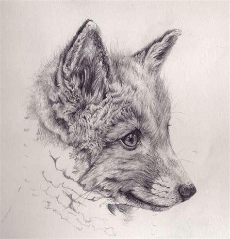 cool fox drawings fox cub mechanical pencil drawing