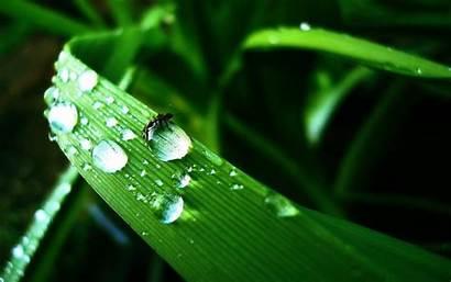 Water Drop Wallpapers Drops Droplet Flower Cool