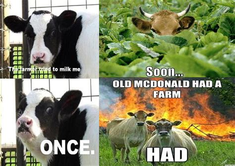Cow Memes - funny cow memes