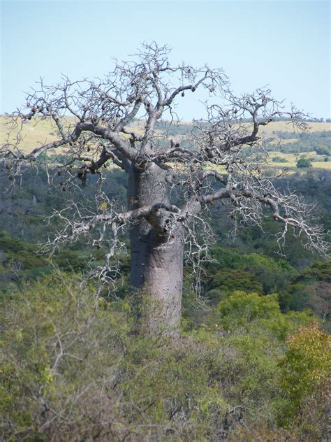 conservation assessment  rare endemic plants madagascar
