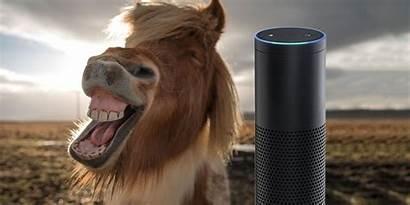 Alexa Questions Funny Ask Funniest Fun Looking