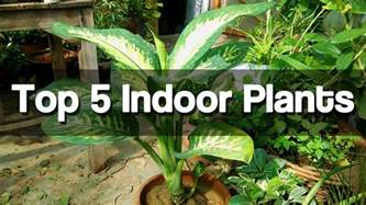 easy plants to grow from seed indoors top 5 best indoor plants easy to grow indoor plants urdu hindi youtube