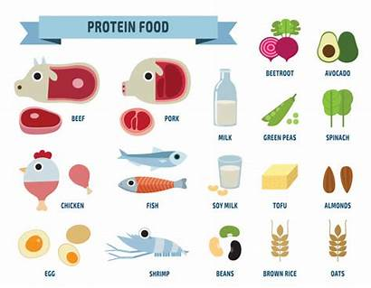 Protein Icons Medical Icone Infographic Brochure Salute