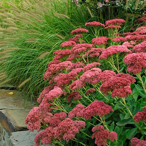 autumn garden plants sarilia country estates saskatchewan impressive affordable river valley property blog