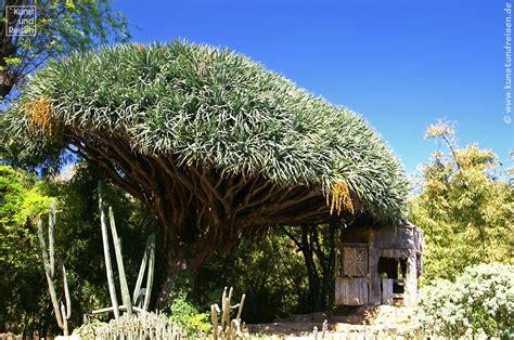 Pilze Botanischer Garten by Garten Bemerkenswert Botanischer Garten Palermo In Bezug