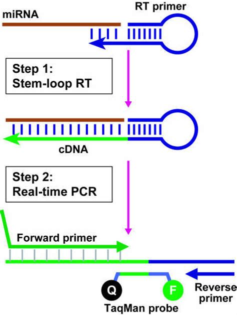 idt primer design rt pcr primer design