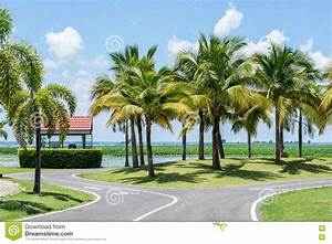 Coconut trees in the park. stock photo. Image of park ...
