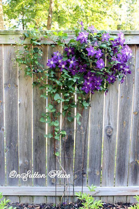 growing climbers for fences how to plant a fence row garden gardens growing up and the o jays