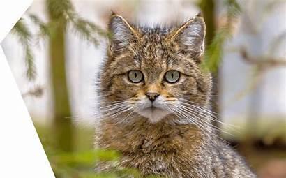 Gato Chat Histoire Gatto Storia Advance Kat