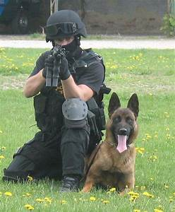 1000+ images about #Belgian #Malinois on Pinterest | Black ...