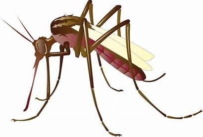 Mosquito Transparent Clip Control Mosquitoes Mosquitos Cartoon