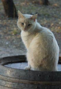 Happy Cat Light : about us lightcatcher winery ~ Watch28wear.com Haus und Dekorationen