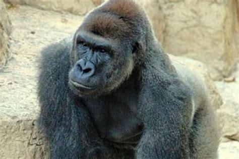 Cartoon Gorilla Hand Rings