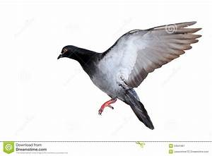 Pigeon Flying | www.pixshark.com - Images Galleries With A ...