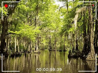 Tammany St Outdoors Parish Louisiana Ivory Been