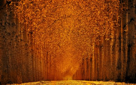 Orange Fall Wallpaper by 25 Fall Wallpapers Backgrounds Images Pictures