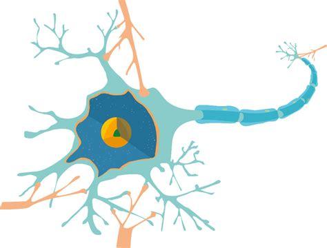 physiologische grundlagen der neurobiologie lernen