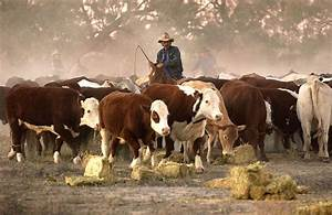 Elders profit jumps higher on a boom in cattle stations ...