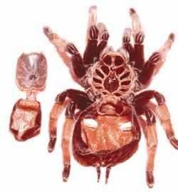 the tarantula keeper s guide cool tools