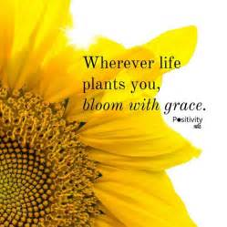 short quotes about sunflowers