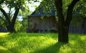 Green Summer Garden HD Desktop Wallpaper, Instagram photo ...