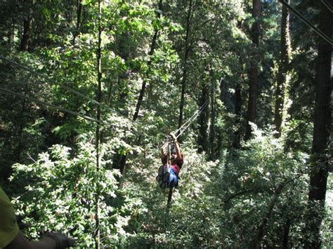 redwood canopy tours redwood canopy tours mount hermon ca top tips before