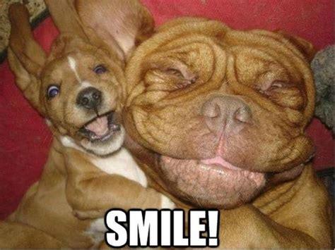 Smile Funny Meme - funny dogs smile