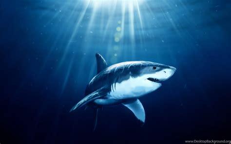 Shark Animated Wallpaper - megalodon wallpapers 183